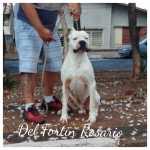 Dogo Argentino Del Fortin Rosario