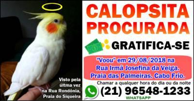Calopsita amarela perdida procurada em Cabo Frio