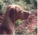 Cão Perdido
