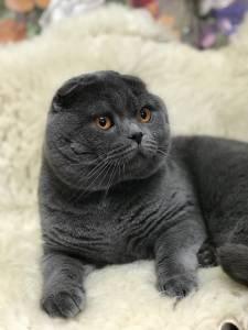 quero cruzar meo gato