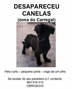 Cão perdido em Canelas Vila Nova de Gaia