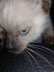 Doa se filhotinha de gato