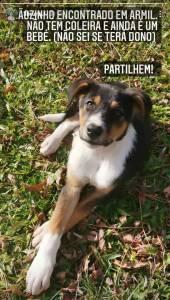 Perro encontrado tricolor marrón Fafe Brown dog pet