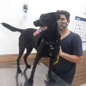 Procura-se a cachorra que atende por Violeta