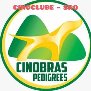 CINOBRAS - Cinoclube SRQ