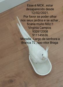Nick caturra branca está desaparecido São Vítor  Braga