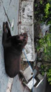 Encontrado na Raposo Tavares  Caucaia do alto coti