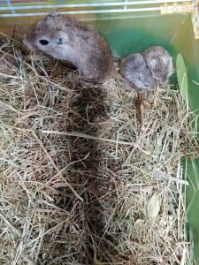 Vendo esquilos da Mongólia