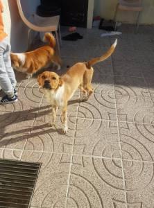 Cachorro para Adopção