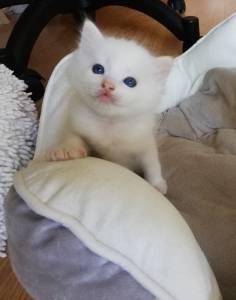 Gato disponível para reserva